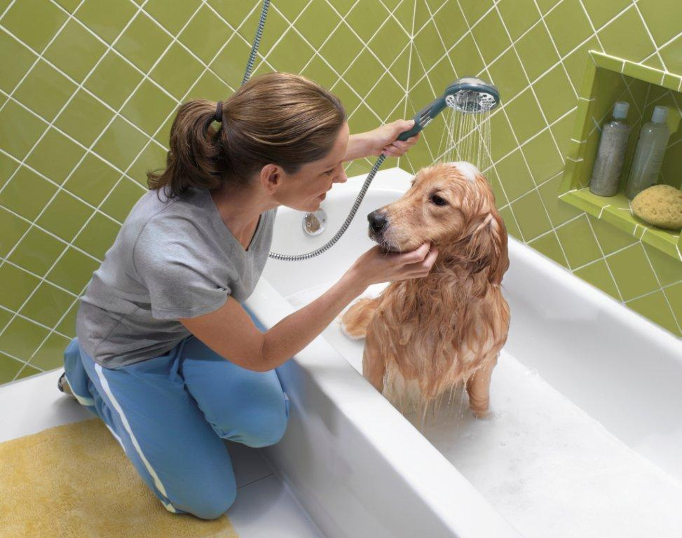 dog and suds - 629×497